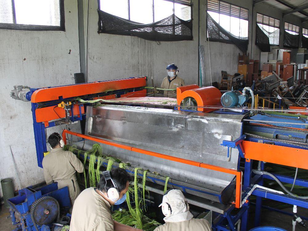 Ya está lista Fiqueña, la tecnología que busca optimizar el proceso de extracción de la fibra del fique en Colombia