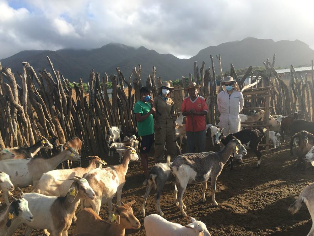 AGROSAVIA realiza monitoreo sanitario en ovinos y caprinos en comunidad indígena Wayuu en la Alta Guajira