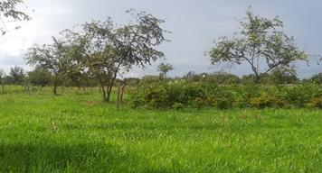 Sistemas silvopastoriles multipropósito (SSPM) de baja intensidad y menor costo para zonas secas del Tolima, Huila y Caquetá