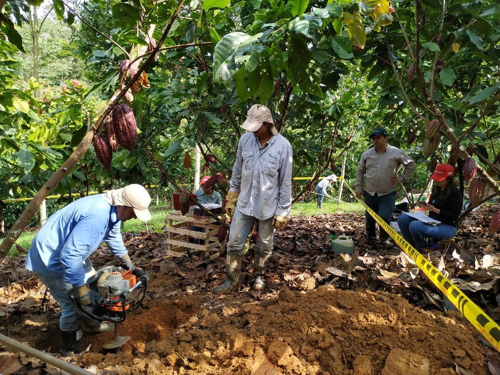 Ya se conoce la distribución de cadmio en suelos,  hojarasca y granos de cacao en Antioquia
