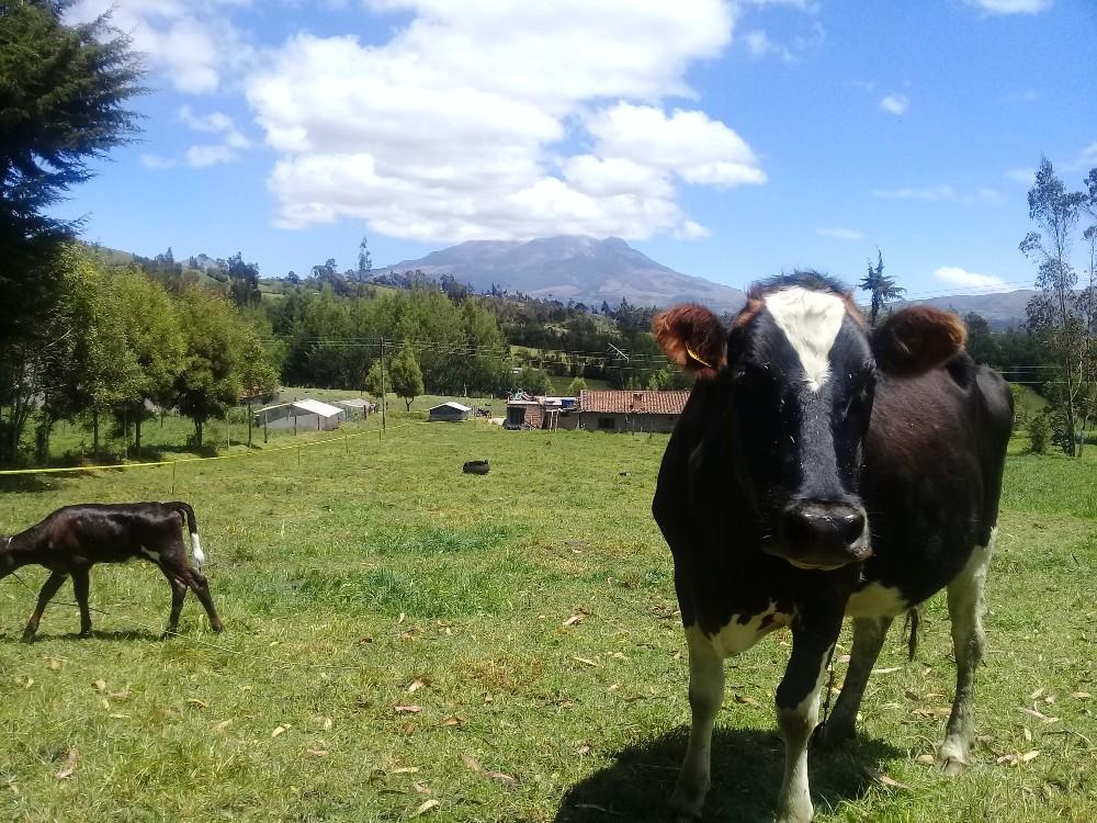 Adoptabilidad de tecnologías del modelo Neozelandés en el trópico alto nariñense
