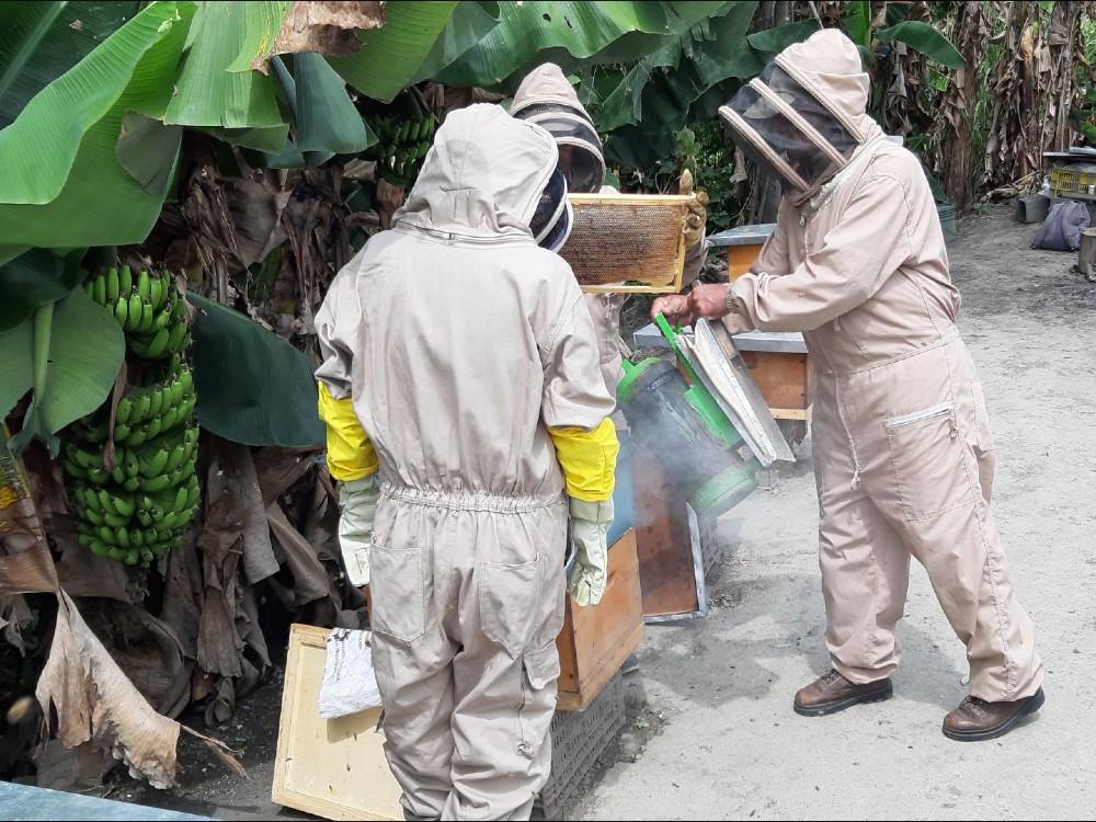Avanza la ejecución en el proyecto de investigación sobre mortalidad de colmenas