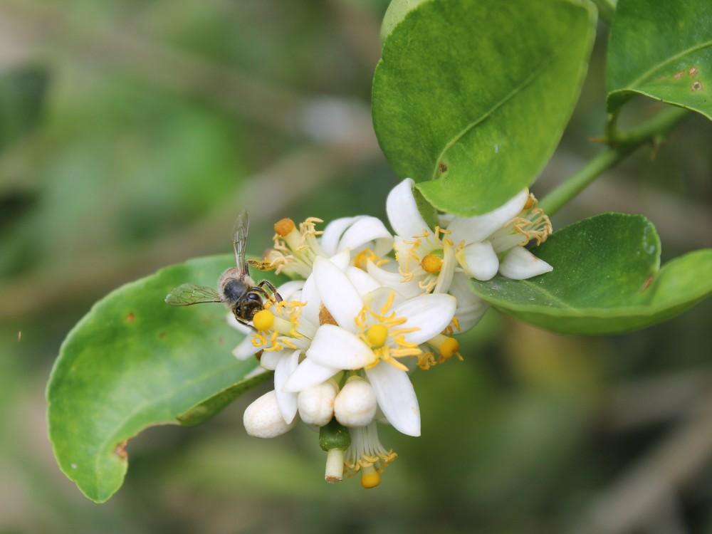 Ciencia, tecnología e innovación para la producción apícola colombiana