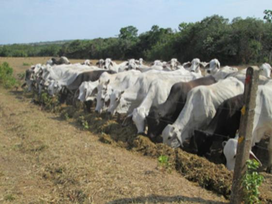 Suplementación estratégica con el uso de cultivos forrajeros y subproductos de la agroindustria para los sistemas de producción bovina de la Orinoquia