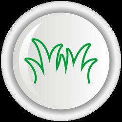 Agrosavia Sabanera (Megathyrsus maximus)