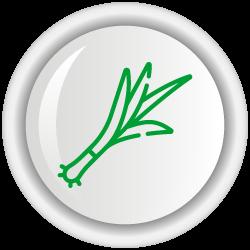 Variedad de Cebolla de rama CORPOICA - TOTA 1
