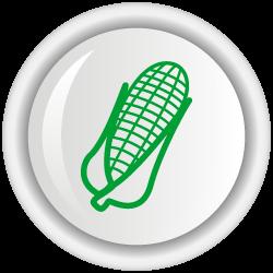 Corpoica V-114: Variedad de Maíz de grano dulce de color amarillo