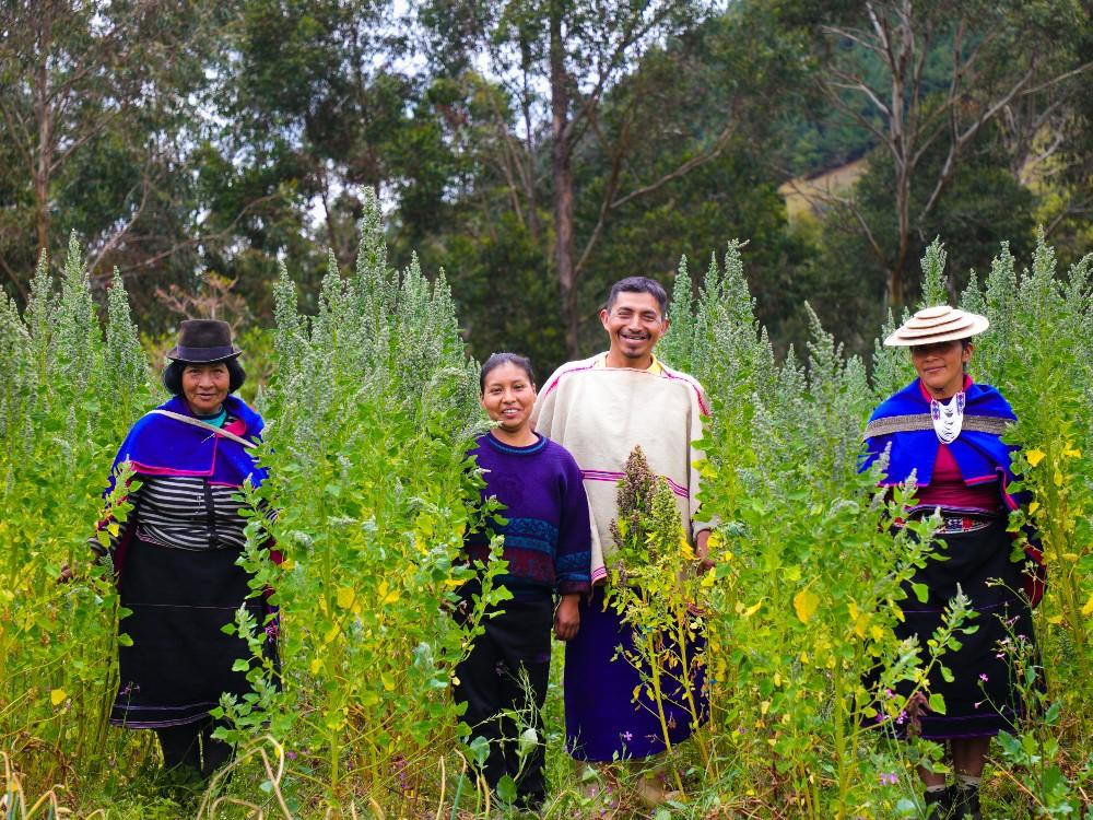 AGROSAVIA lanza oficialmente proyecto de investigación de quinua en Cauca: el mayor productor en Colombia