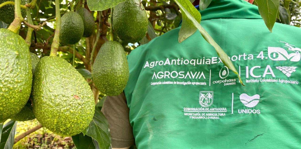 Antioquia cerrará el año con 560 predios más con registro ICA para la exportación de productos agrícolas en fresco