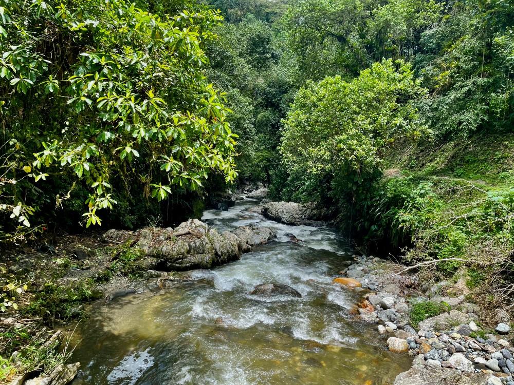 AGROSAVIA firma acuerdo para proteger las cuencas de los ríos Frío y Sevilla en el departamento de Magdalena