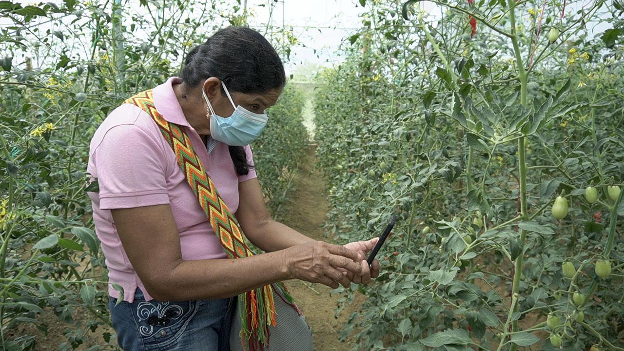 AGROSAVIA presenta alternativa para producir hortalizas en zonas de altas temperaturas