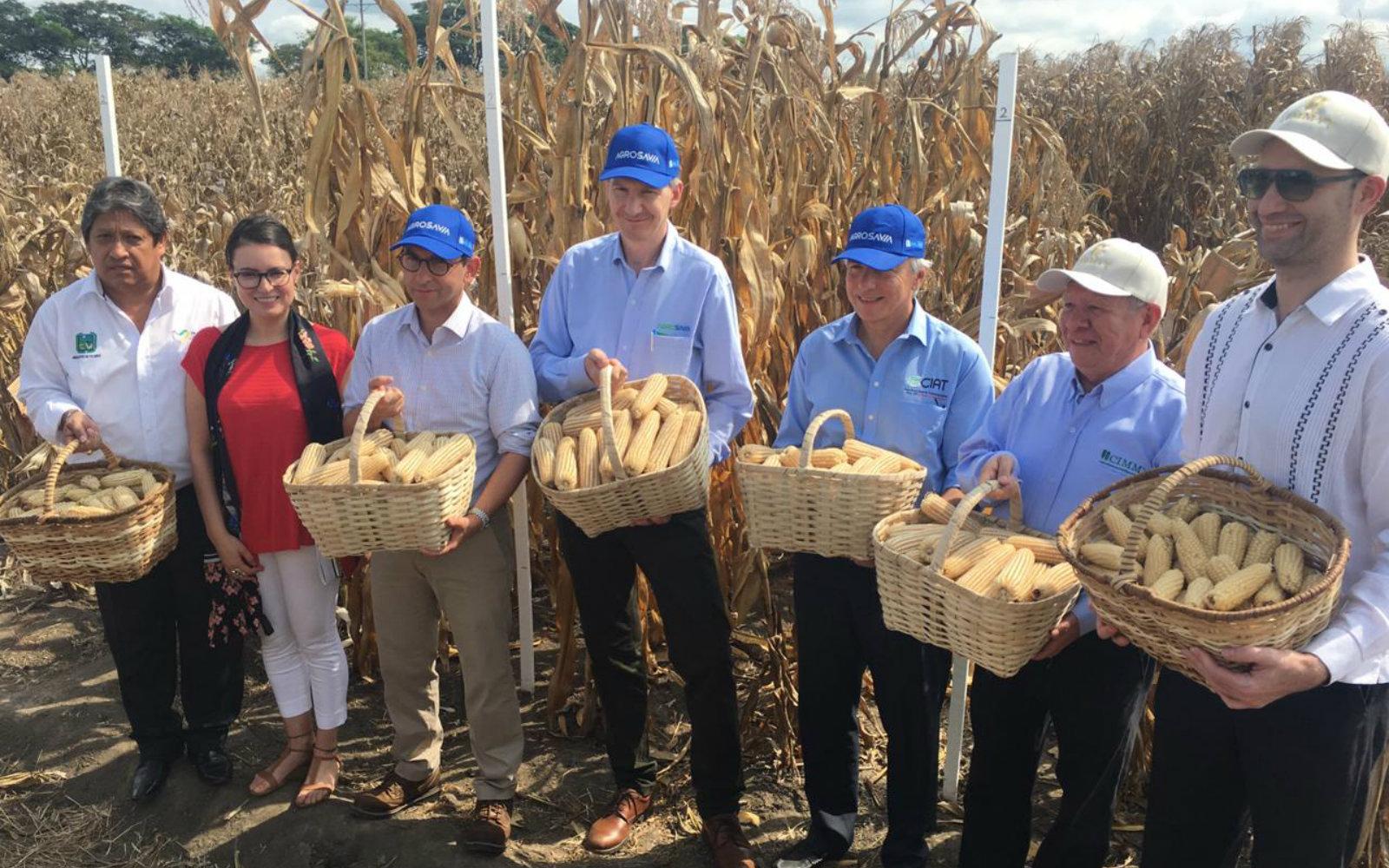 Apertura del convenio de cooperación entre CIMMYT y AGROSAVIA  para la reactivación del programa de maíz en Colombia