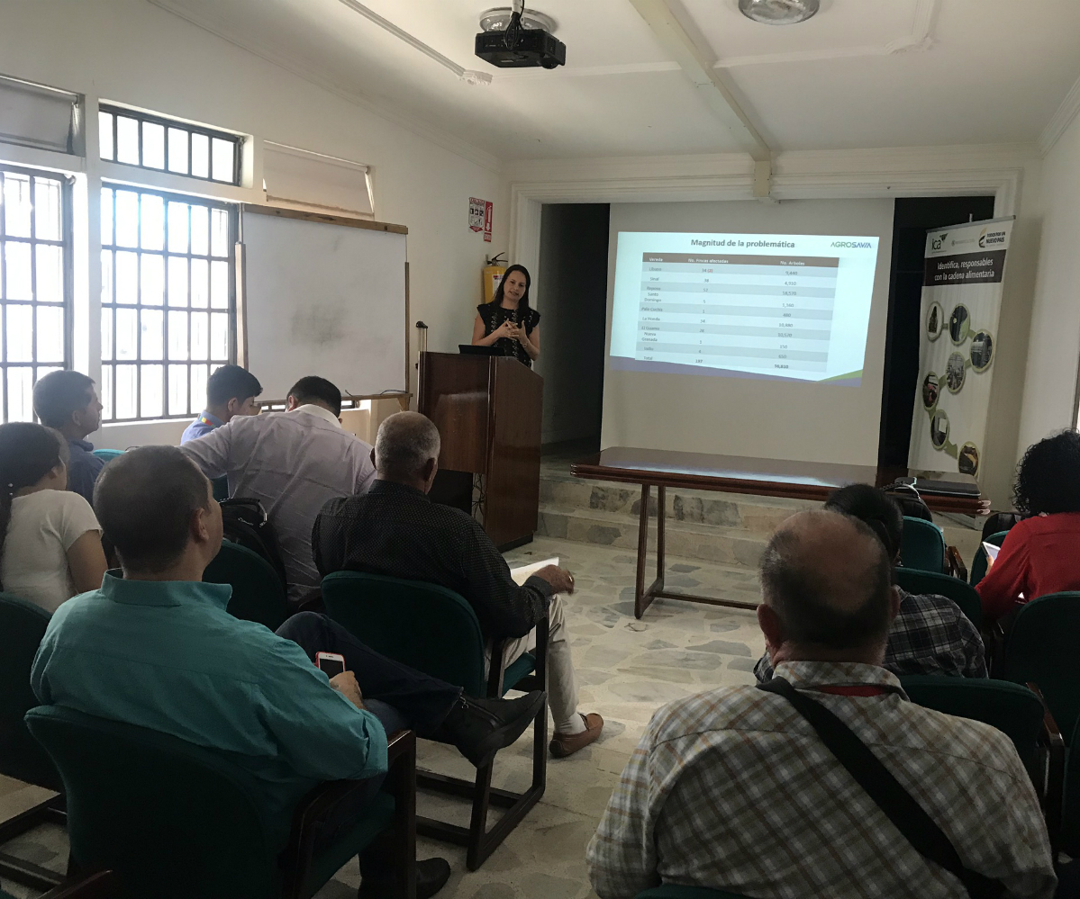 AGROSAVIA formuló proyecto en Aguacate para Santander