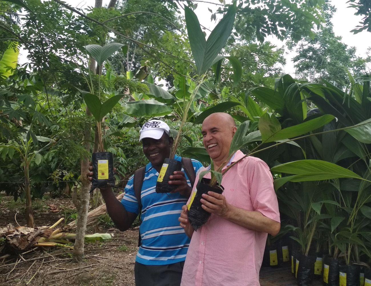 350 mil clones de cacao y 50 mil palmas de chontaduro se entregarán en la Costa Pacífica Nariñense para sustitución de cultivos de uso ilícito