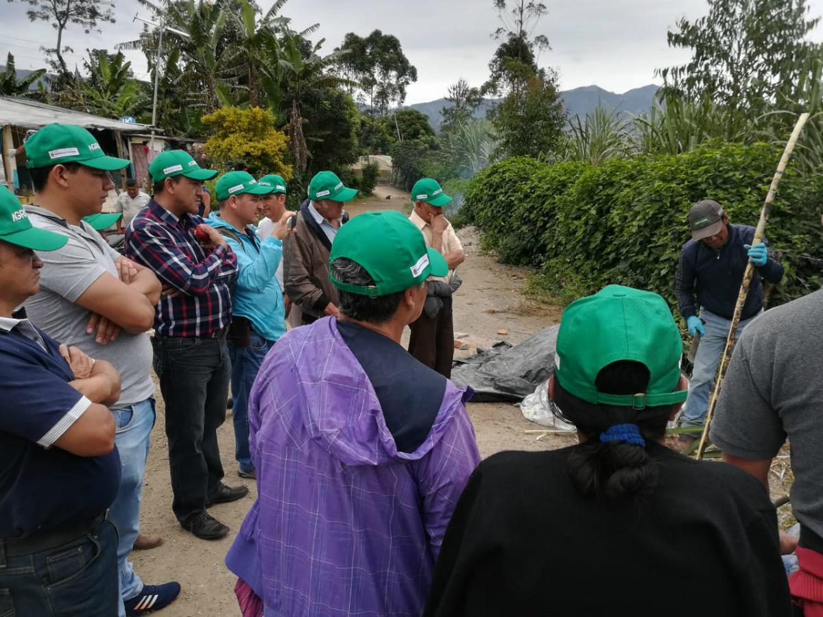 Liberación experimental de Trichogramma en el municipio de Sandoná