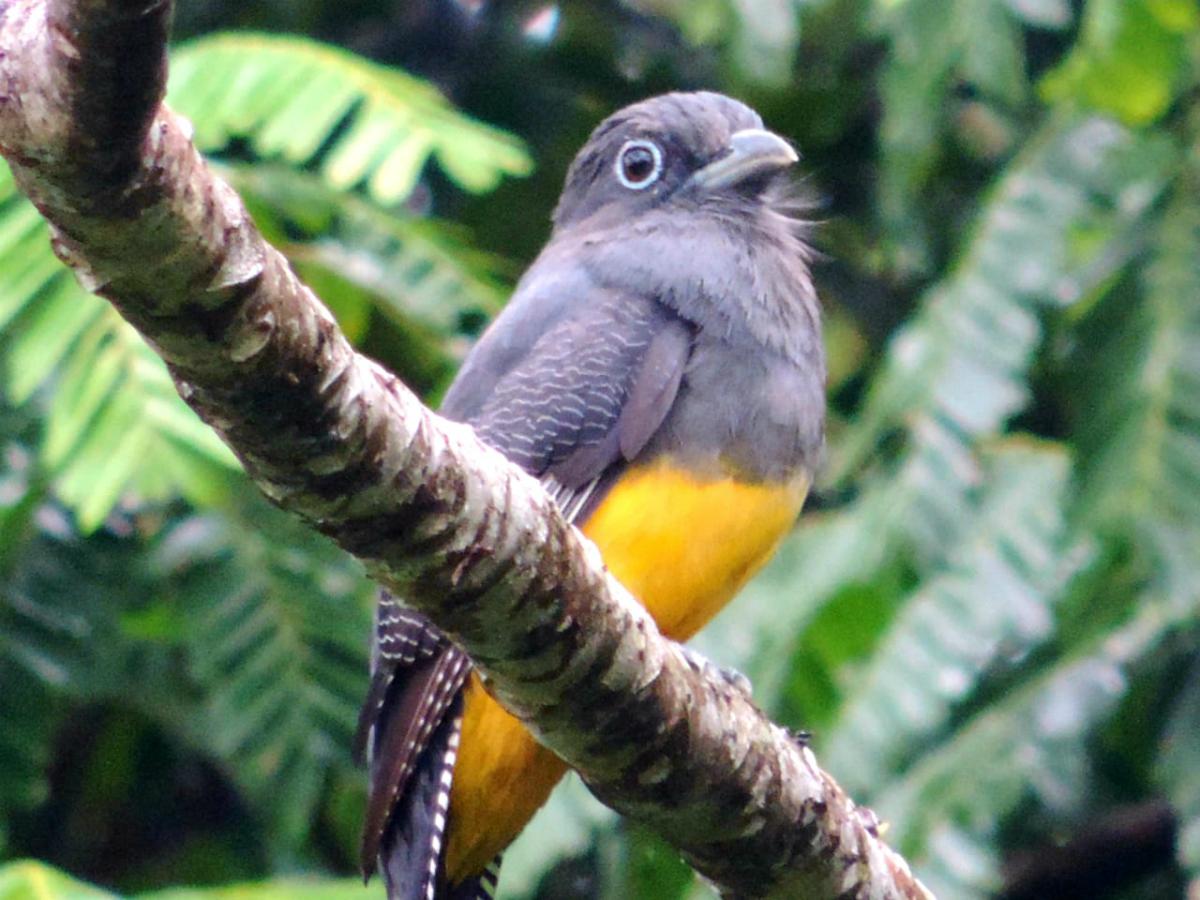 Más de 100 aves fueron observadas en  los centros de investigación Carimagua y la Libertad de AGROSAVIA