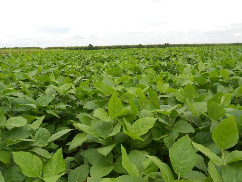 Corpoica Guayuriba 9:  nueva variedad de soya para los ecosistemas del Piedemonte Llanero y suelos mejorados de la Altillanura Plana