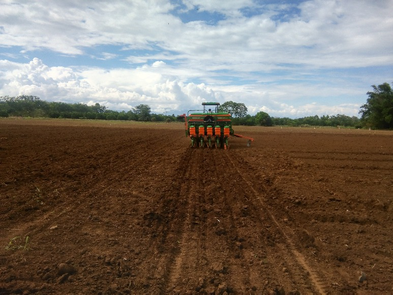 Recomendaciones para el manejo de suelos arroceros degradados del Piedemonte Llanero