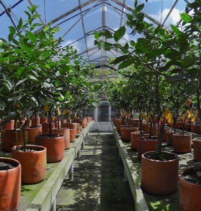 Mejoramiento Genético Vegetal, Uso y Aprovechamiento de la Agrobiodiversidad (MGVA)