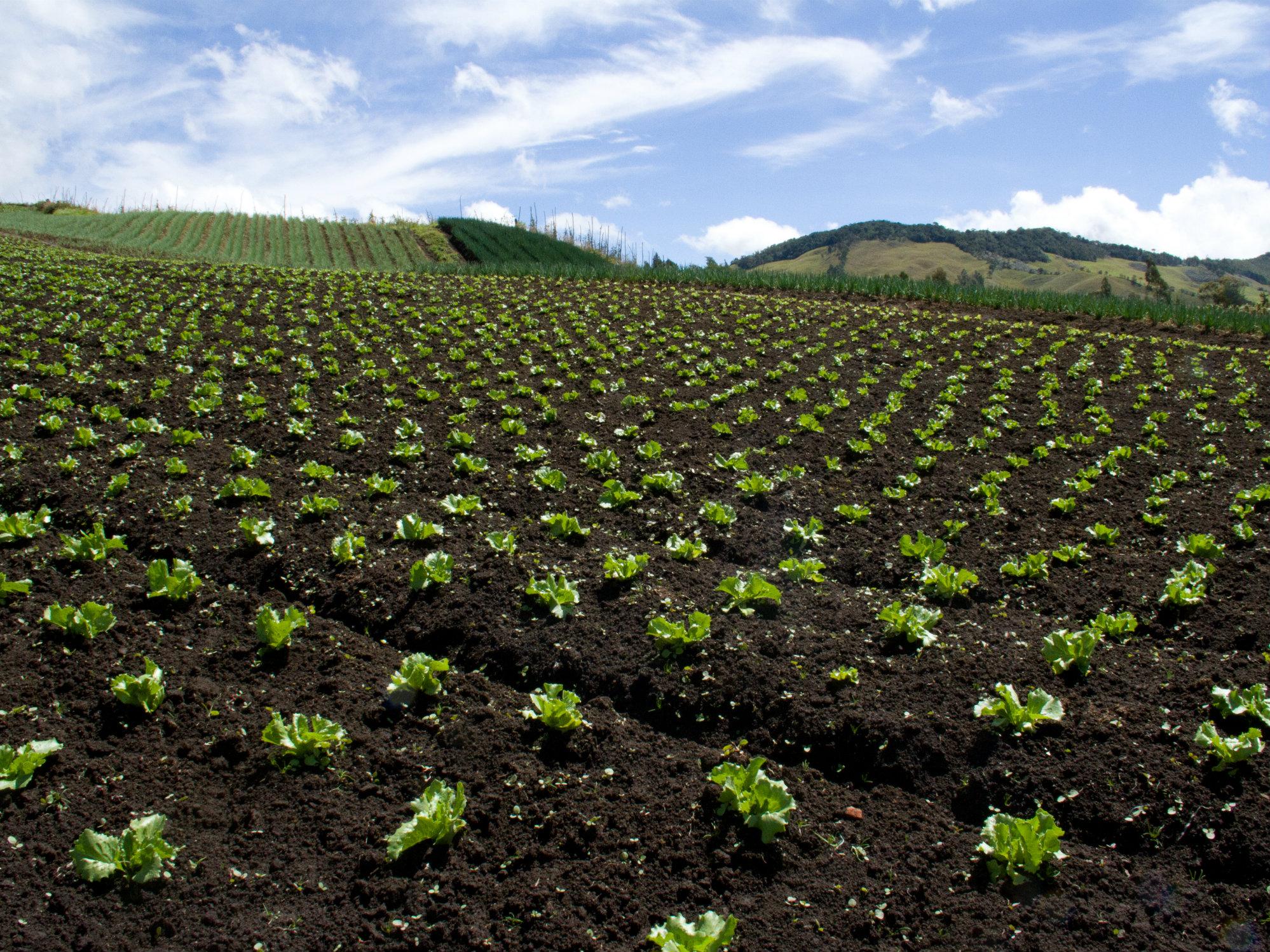 Un buen plan de manejo de un cultivo incluye bioproductos