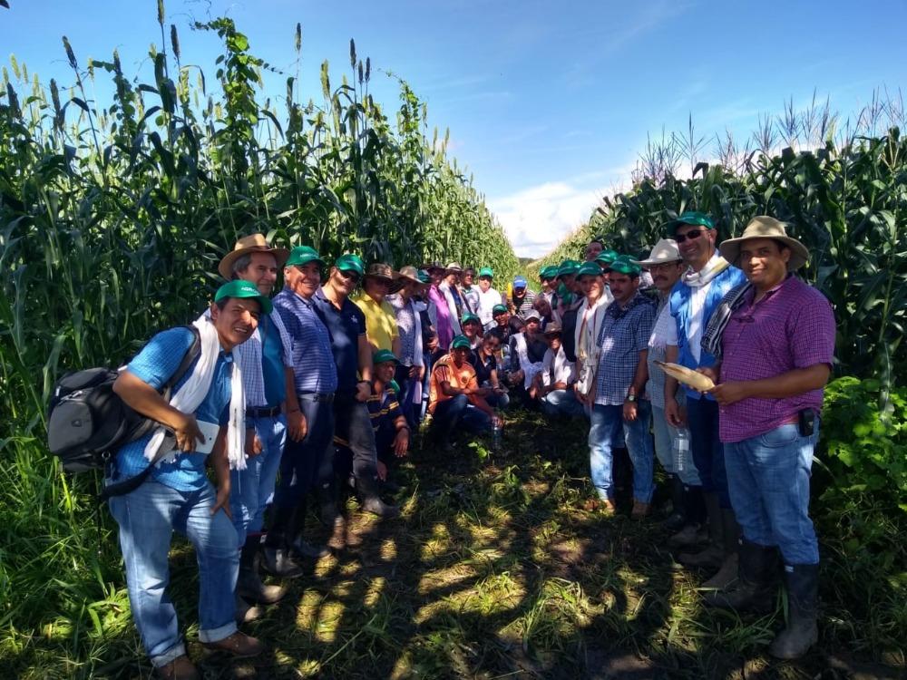 AGROSAVIA realizó gira técnica sobre establecimiento y manejo de sistemas agrosilvopastoriles en San Martín, Meta
