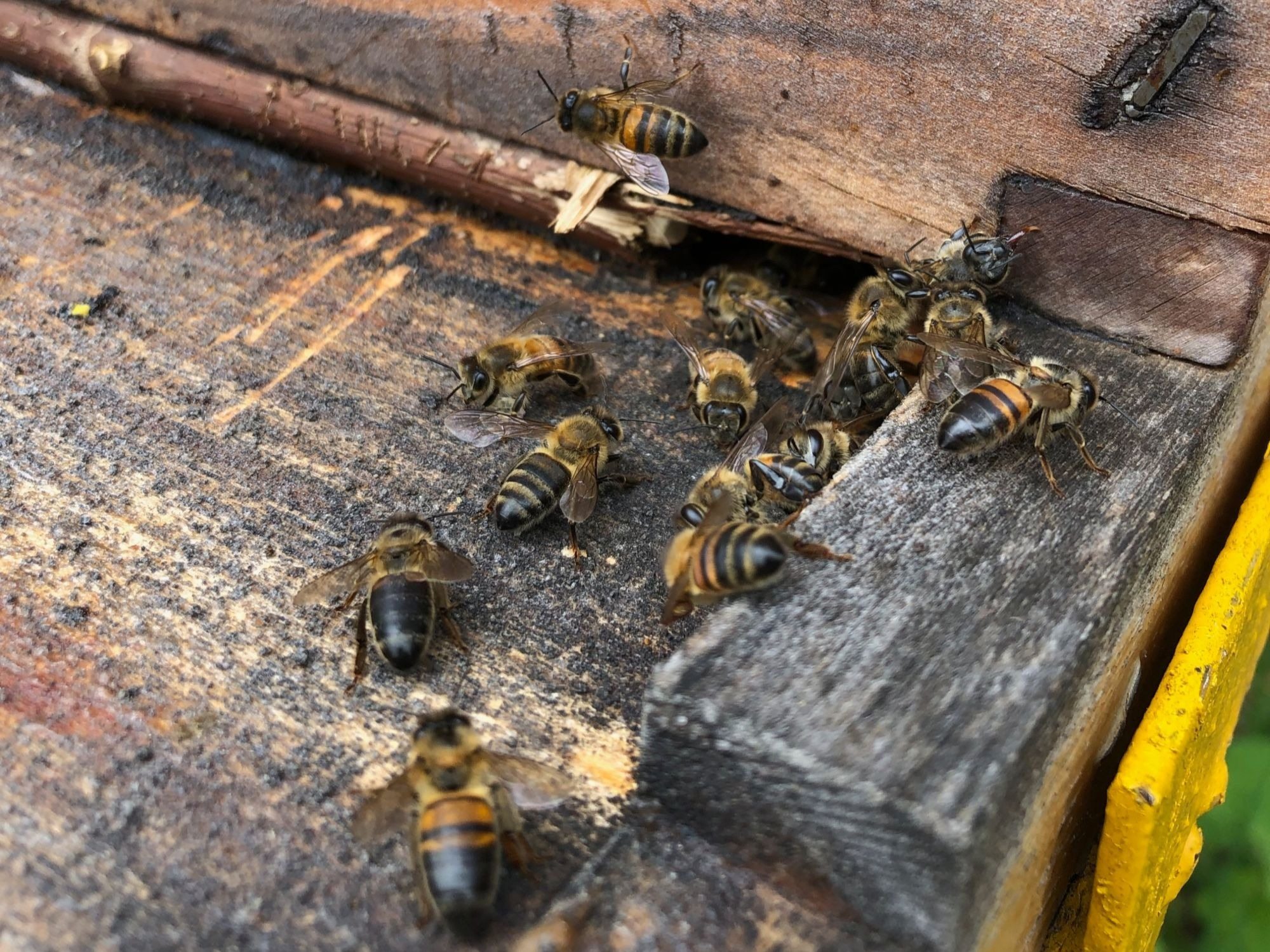Las abejas: su potencial y limitantes, temas centrales del 1er Congreso de Apicultura Intercontinental en Manizales