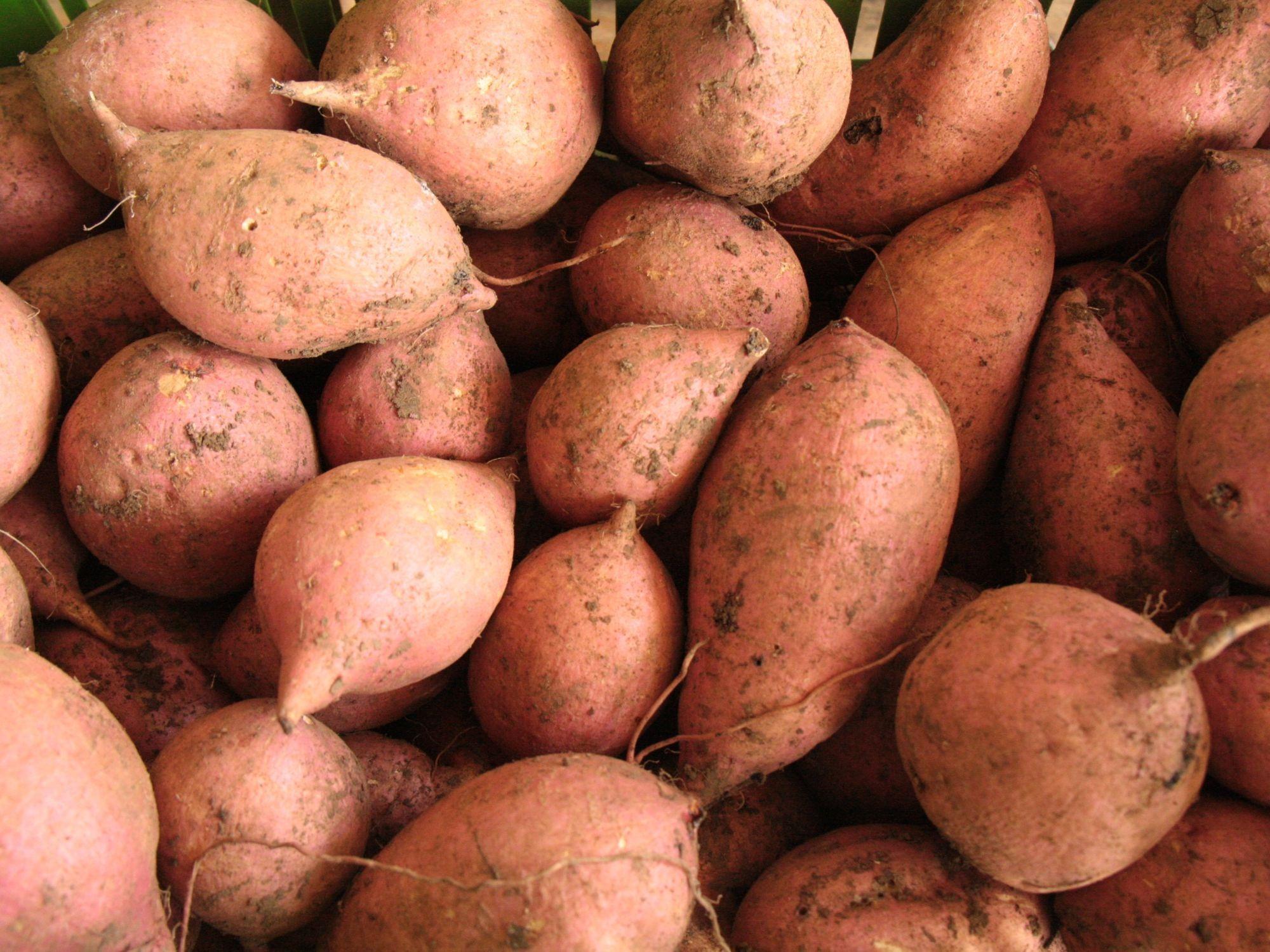 AGROSAVIA cerca a productores y aliados en la Feria Agropecuaria de Sincelejo