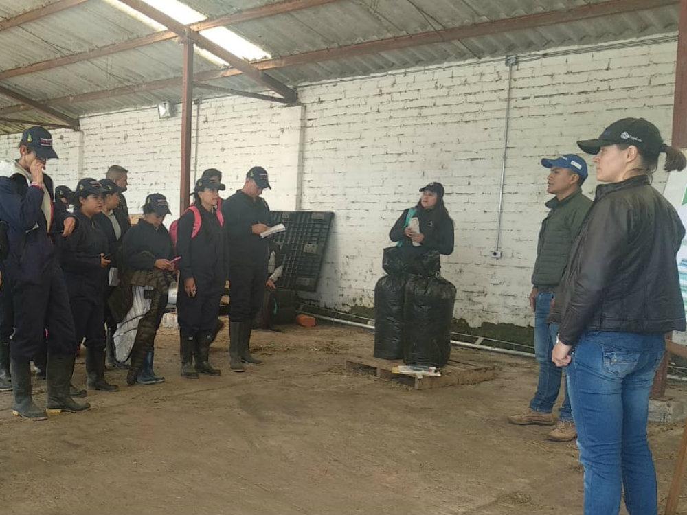 Estrategias para mejorar la oferta forrajera y la calidad de leche en Nariño: una experiencia de aprendizaje