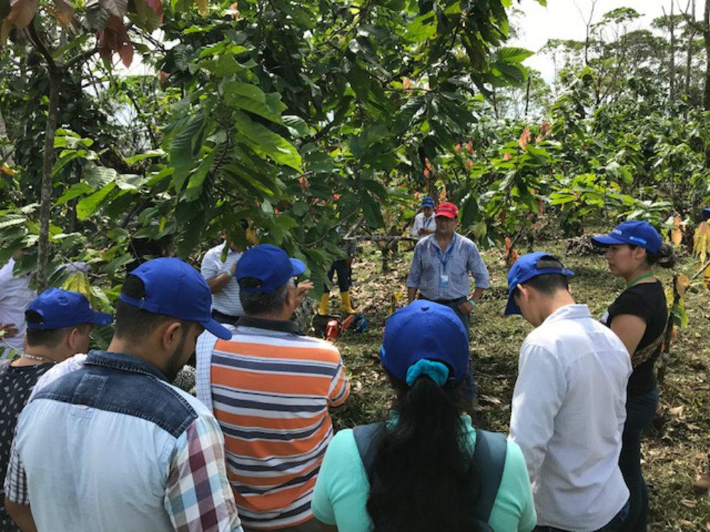 AGROSAVIA desarrolla Jornada de Actualización Tecnológica  en cacao para el departamento del Caquetá