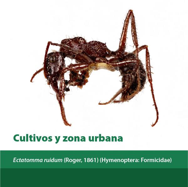 Cultivos Y Zona Urbana A