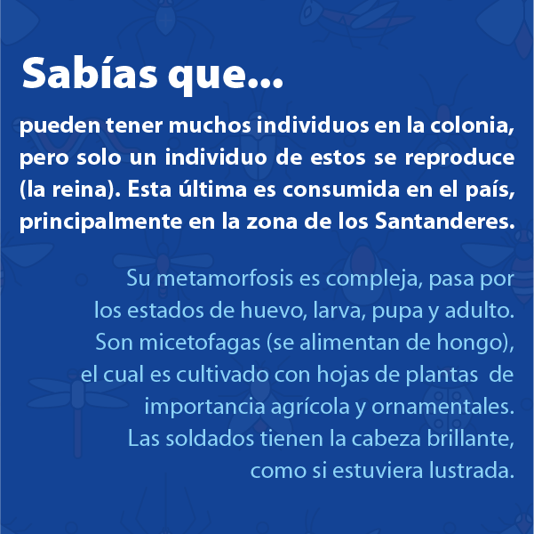Hormiga Arrieta Santandereana B
