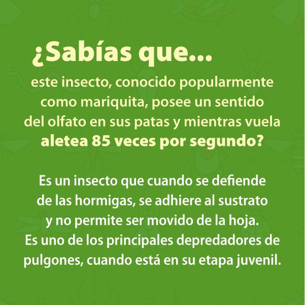 Mariquita B