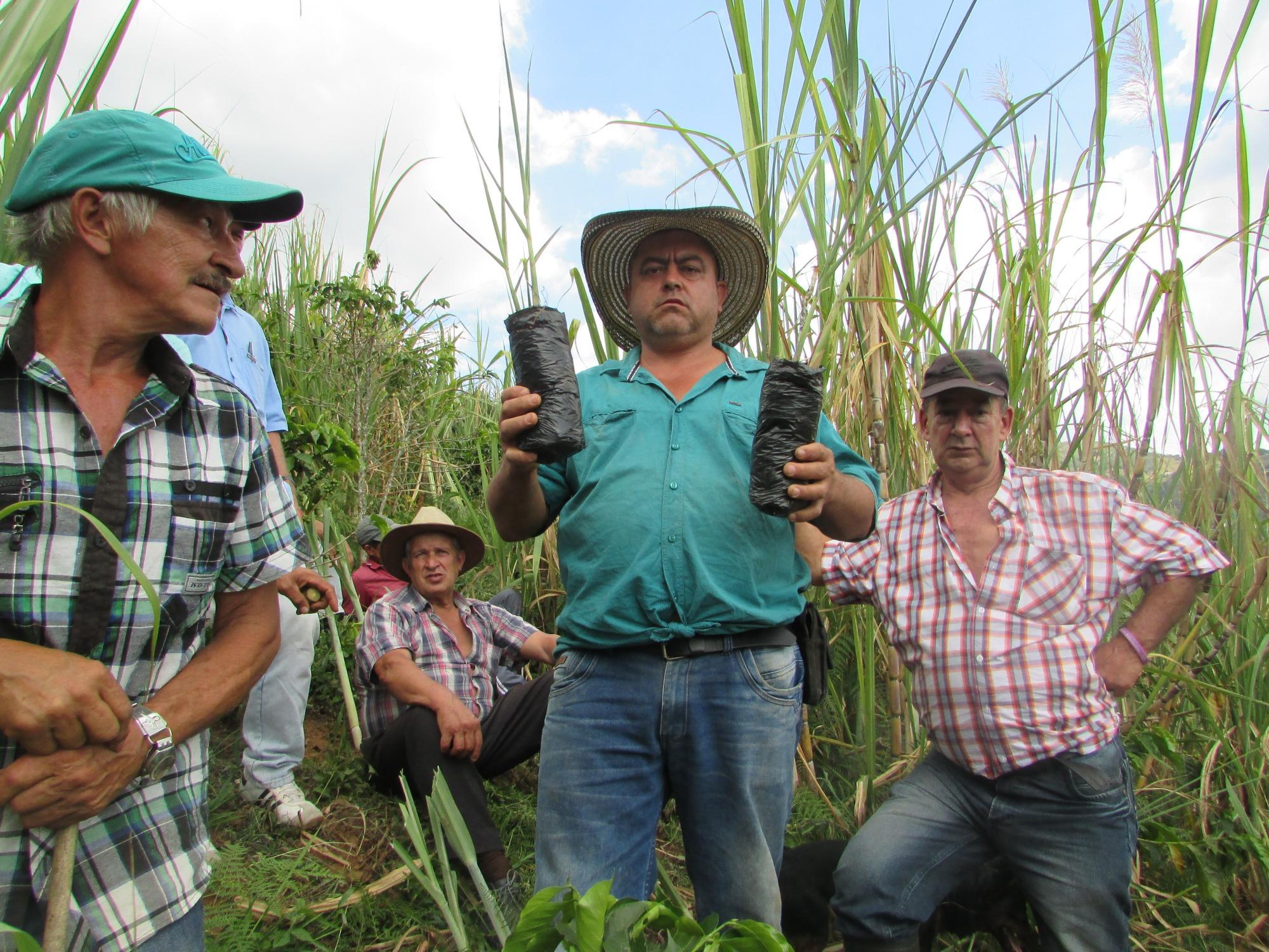AGROSAVIA y la Alcaldía de Medellín contribuyen al renacer panelero en el corregimiento de San Sebastián de Palmitas