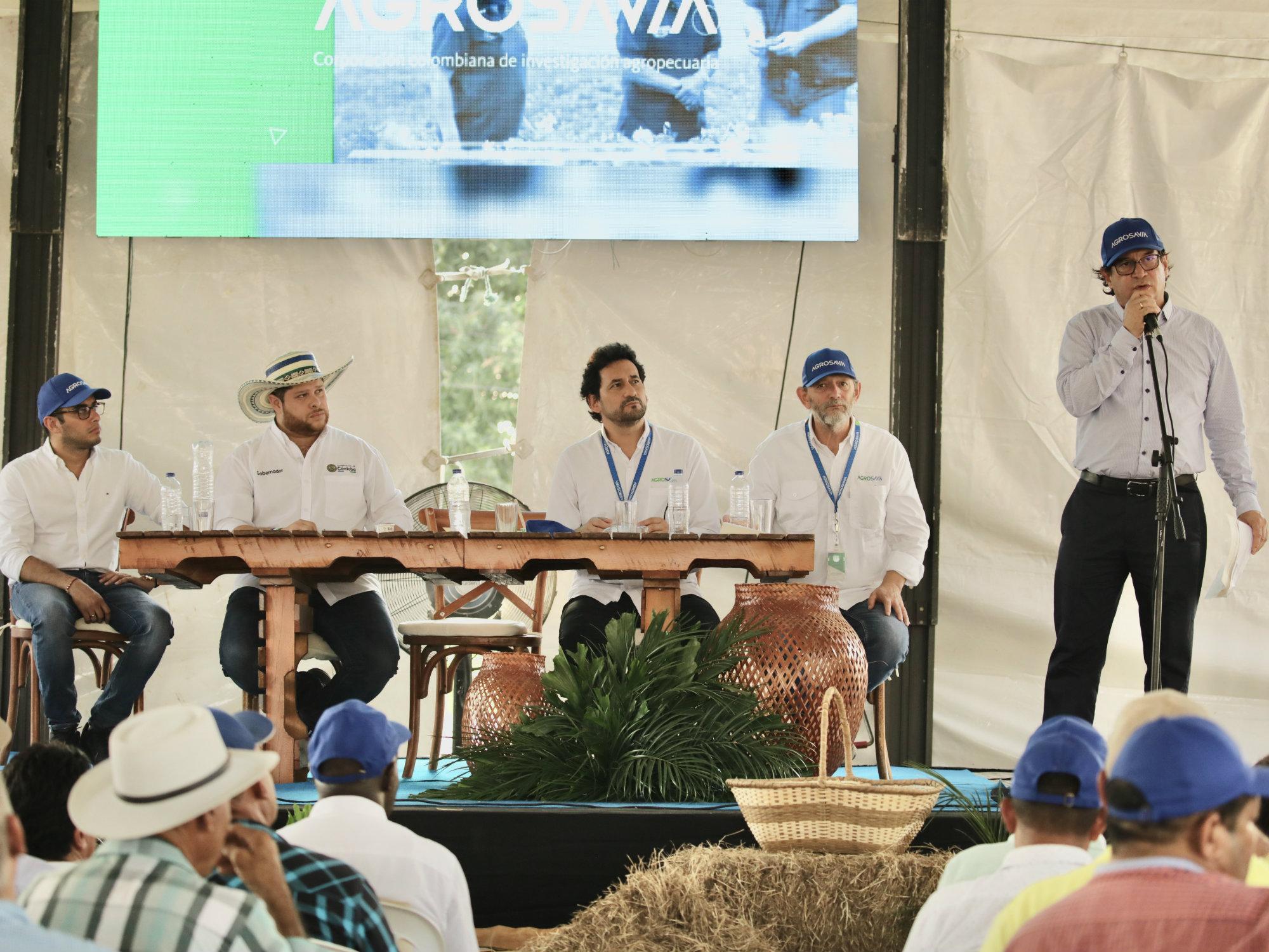 MinAgricultura y AGROSAVIA trabajan por alternativas forrajeras para alimentación de bovinos en épocas críticas