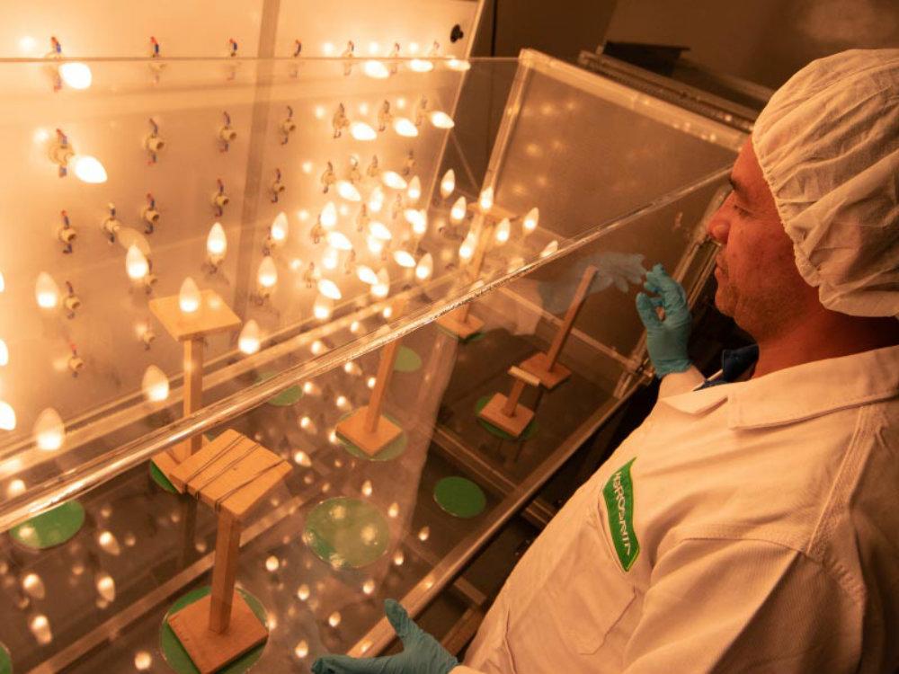 Red de laboratorios de Entomología
