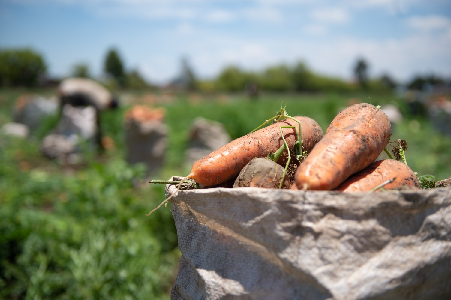 AGROSAVIA fortalece su compromiso con el sector agropecuario y los consumidores en épocas del Covid-19