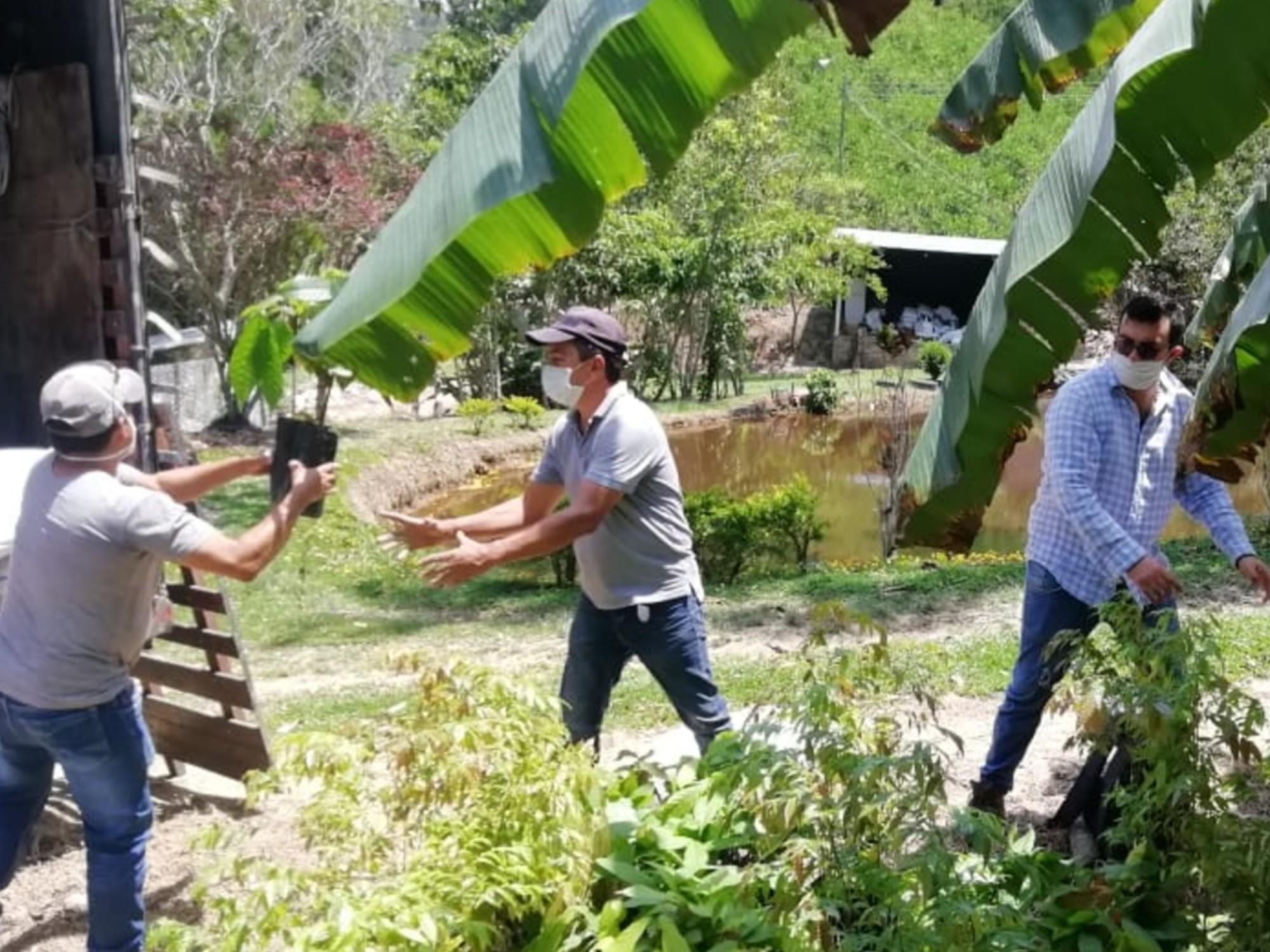 AGROSAVIA retoma entrega de 21 mil plántulas de cacao en Santander y Boyacá