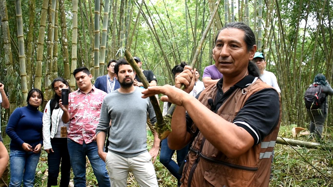 AGROSAVIA – INBAR Una alianza estratégica para el aprovechamiento sostenible y ambiental del bambú en Colombia