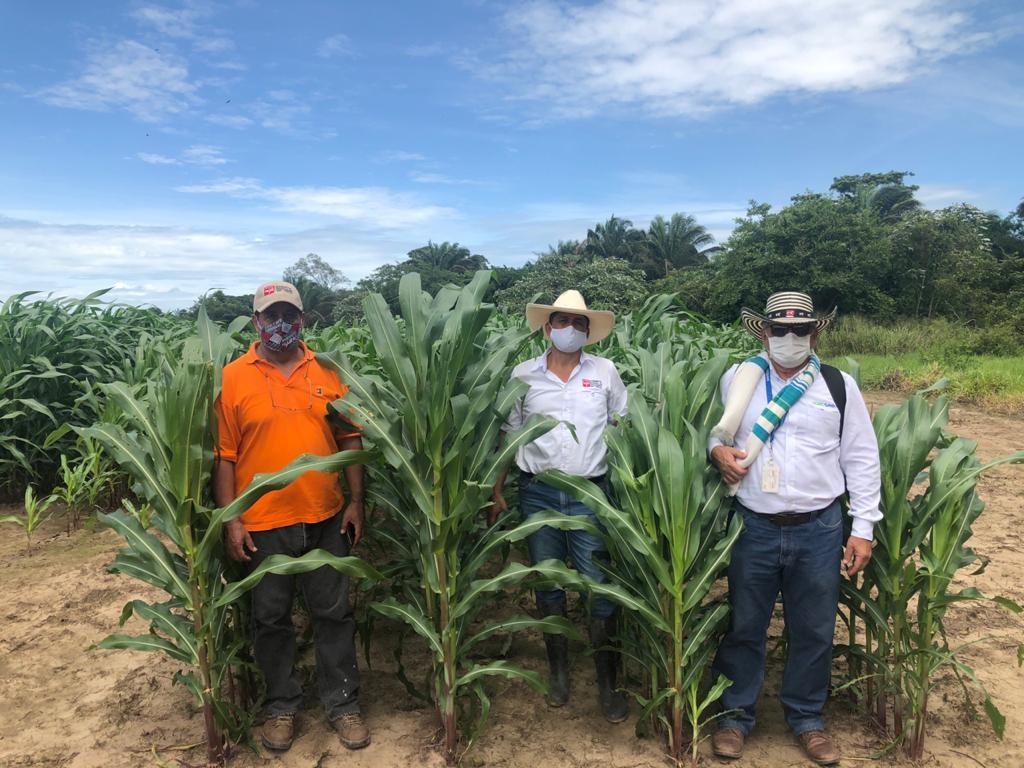 Proyecto de silo de maíz en Casanare, convenio AGROSAVIA - MADR