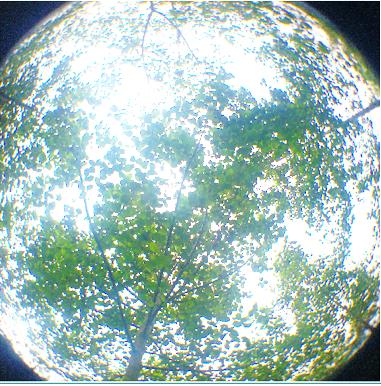 Fotografías hemisféricas para estimación de la cantidad de radiación e iluminación de la cobertura arbórea