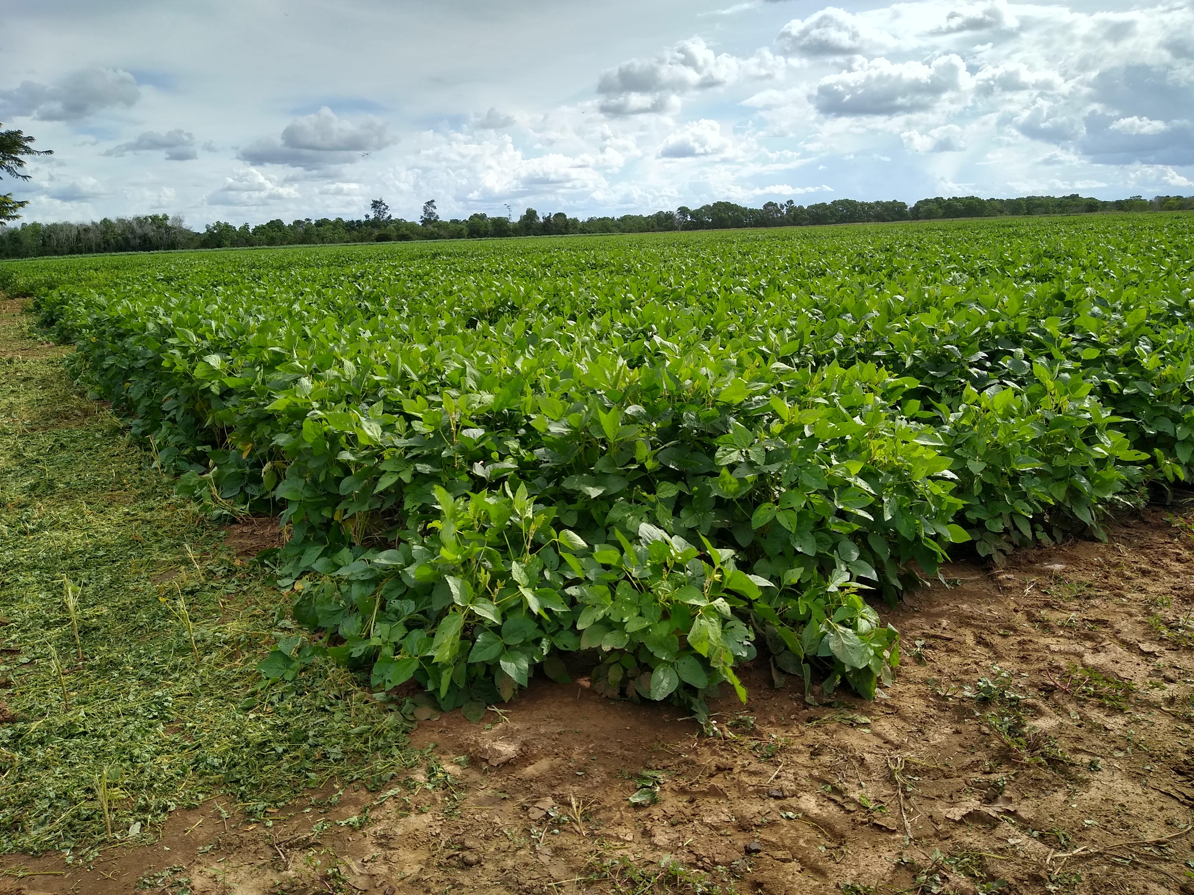 Vitrinas tecnológicas de las variedades de soya y arroz en el departamento del Meta