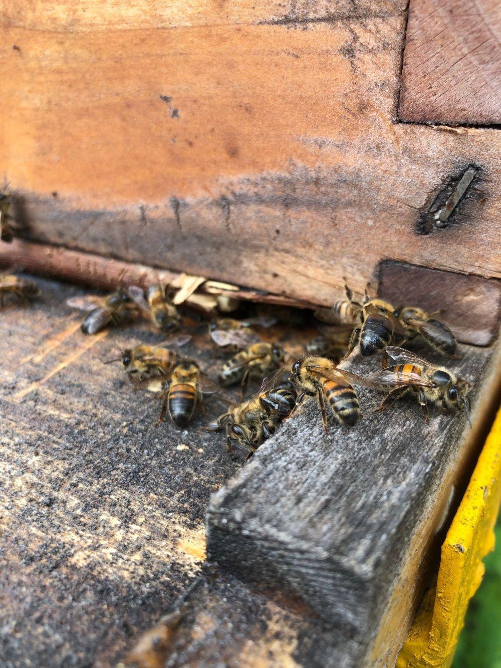 Abierta invitación a apicultores para participar en investigación sobre mortalidad de colmenas