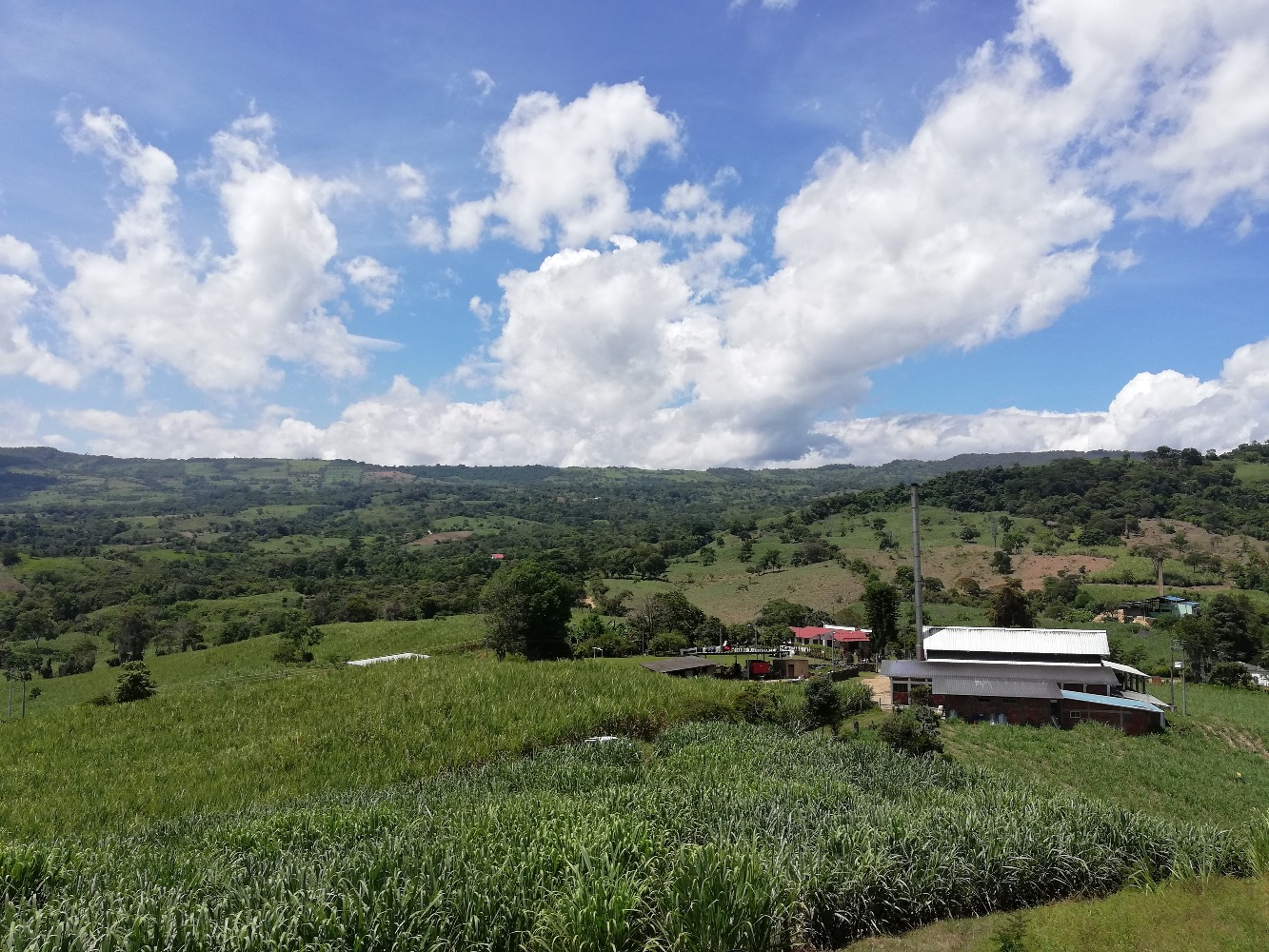 AGROSAVIA invita al Foro: Sector panelero en tiempos de pospandemia: retos de la implementación de la Ley 2005 de 2019