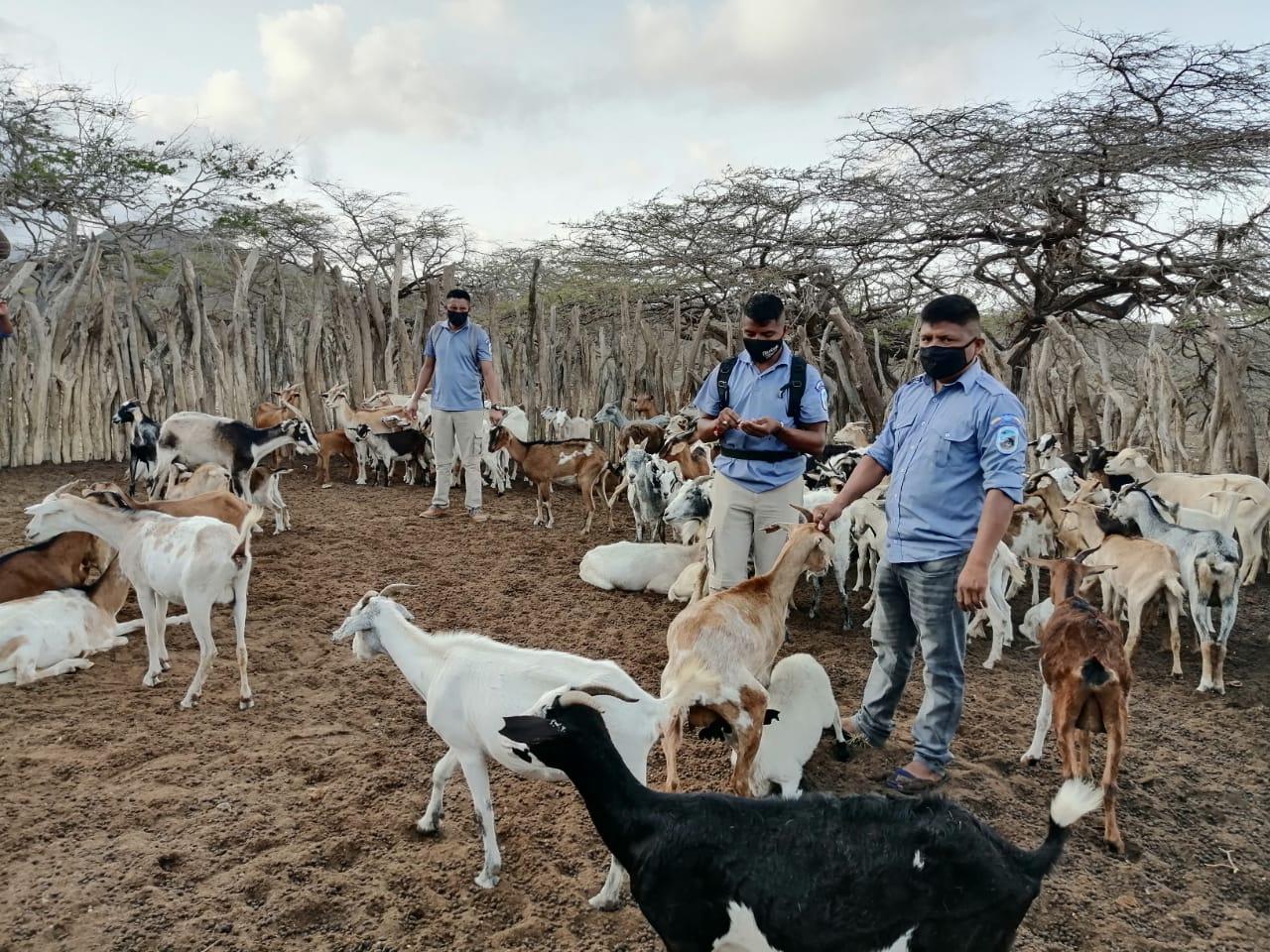 AGROSAVIA firma convenio para desarrollar estrategias de uso sostenible de la biodiversidad en la Alta Guajira