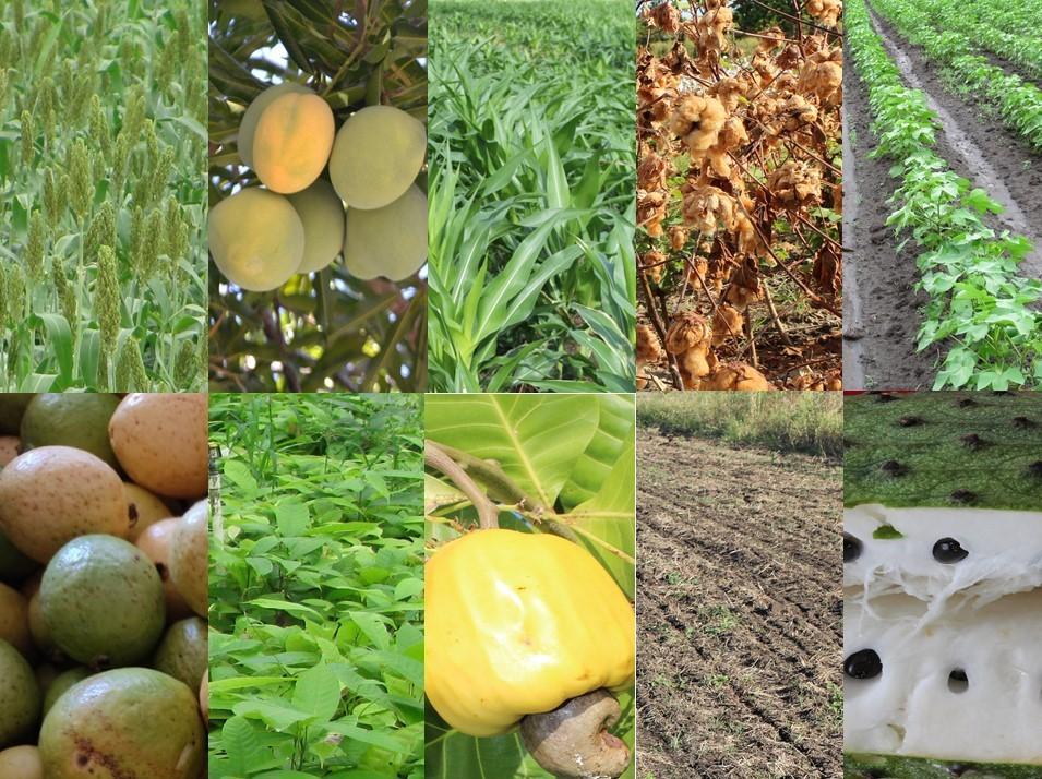 Seminario Internacional sobre fisiología de cultivos en AGROSAVIA