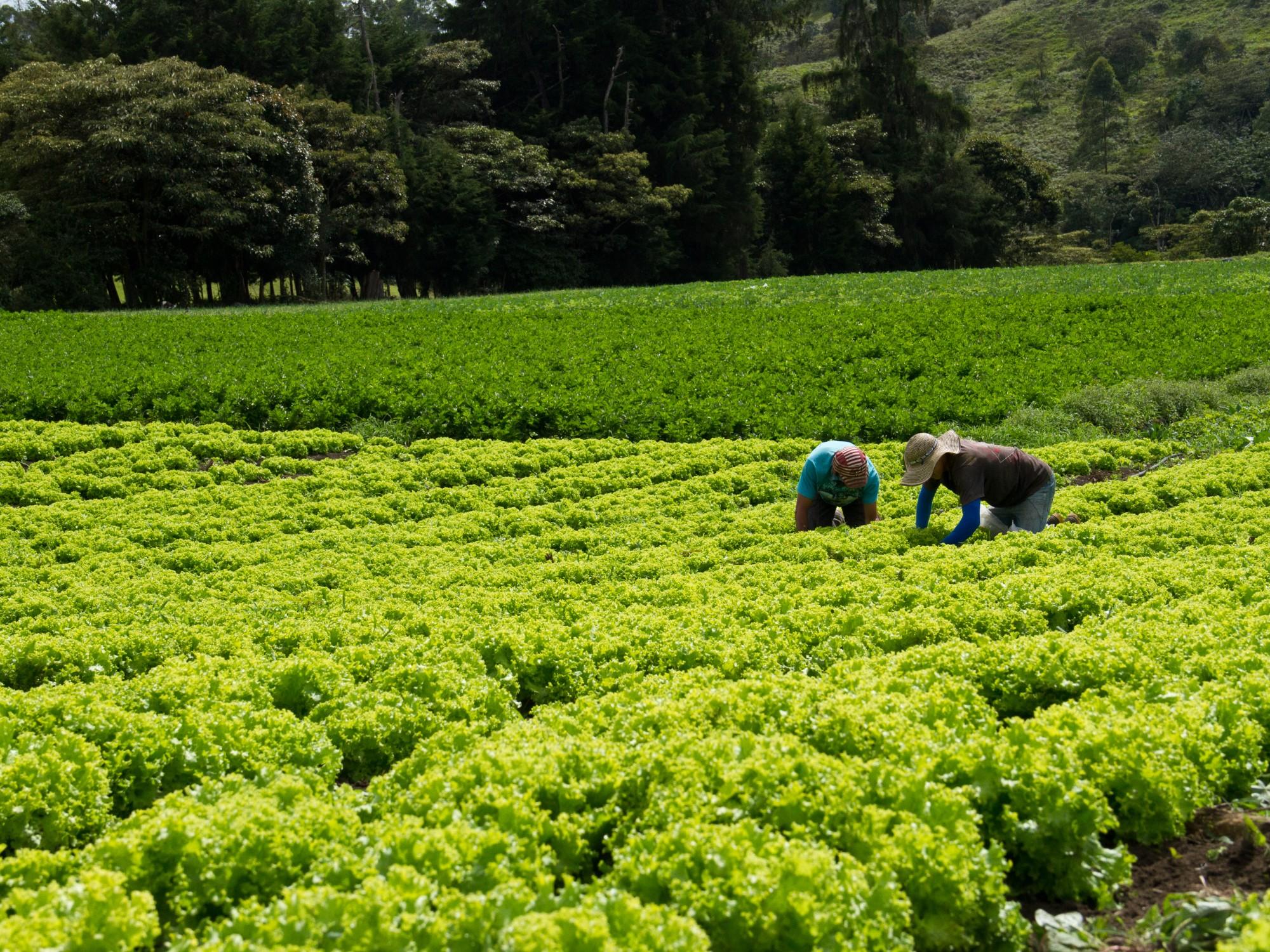 AGROSAVIA entregará Bioplaguicida TRICOTEC para el fortalecimiento de las capacidades productivas de agricultores en Cundinamarca