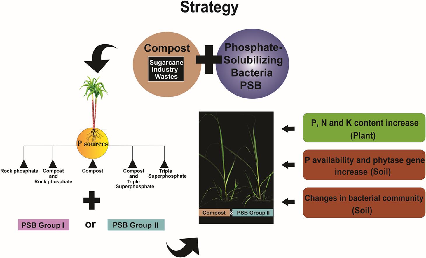 Nueva estrategia de fertilización para el cultivo de caña de azúcar disminuye impacto ambiental