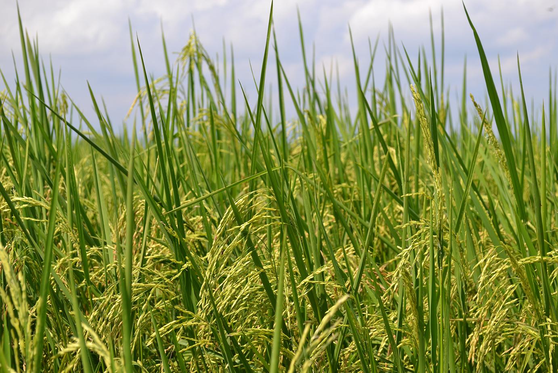 Anticípese a la variabilidad climática que llega con el inicio de la temporada seca