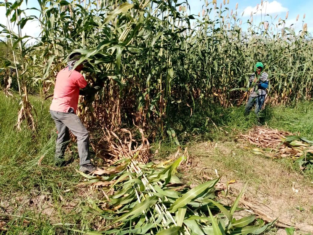 El Fondo de Investigación para Retos Globales, aprobó el proyecto sobre agricultura familiar para el Ariari en el departamento del Meta